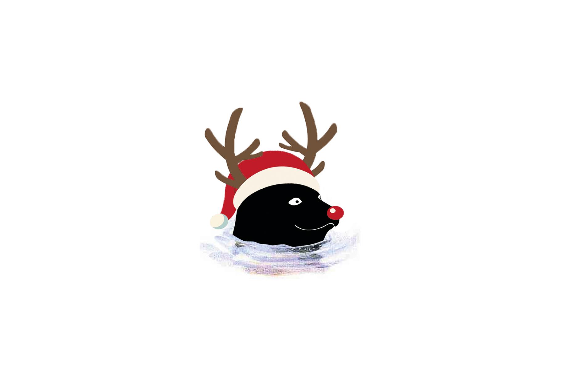 weihnachten-neu-jahr-seehund-mdeia